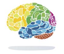 cerveau FRC