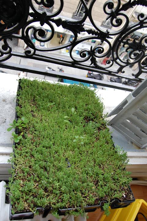 La pelouse de France ou comment amener du vert rue Saint Denis